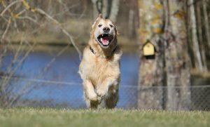 Comment pratiquer le rappel avec son chien ?